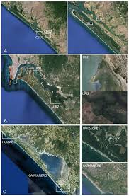 Map Of Mazatlan Mexico by Forests Free Full Text Genetic Diversity Of The Black Mangrove
