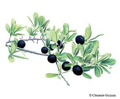 What Fruit Trees Grow In Texas - wild harvest texas u0027 bounty of native fruits tpw magazine august