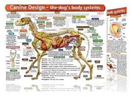 Anatomy Of A Cats Eye 101 Best Images About Veterinarian Dreams On Pinterest Dog