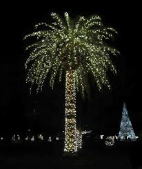 palm tree with lights palm trees wrapped with
