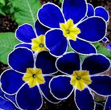 214 best flowers u0026 gardens images on pinterest flowers plants