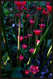 Cairns Botanical Garden by Flower Jungle Cairns Photo