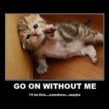 Go On Meme - go on without me man flu slap laughter by sdl
