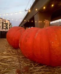 halloween stores culver city au fudge u0026 platform u0027s pumpkin patch pumpkin patches 8850