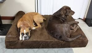 Dog Sofas For Large Dogs by Top 15 Best Dog Beds For Large Dogs Reviews In 2017