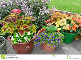 patio of potted plants stock photo image 55385725