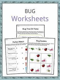 bug u0026 insect facts worksheets u0026 information for kids