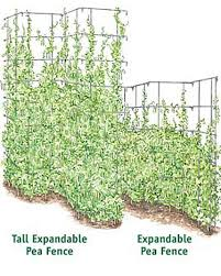 How To Make Trellis For Peas Gardenerd Organic Edible Gardening Growing Peas
