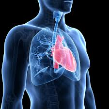 johnson johnson homepage johnson johnson 5 things we now know about pulmonary arterial hypertension