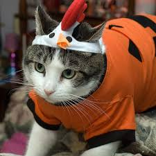 Cat Halloween Costumes Cats 216 Cats Cotumes Images Animals Cats
