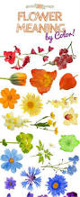 100 color of flowers meaning 25 best meaning of