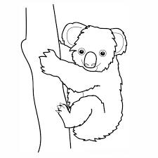 coloriage koala a imprimer gratuit