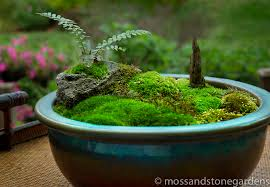 Tabletop Rock Garden Moss Martha Moss Rocks Moss And Gardens