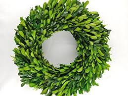 preserved boxwood wreath preserved boxwood wreath 12 in by tradingsmith home
