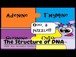 dna structure and function youtube