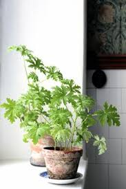 scented indoor l oil create an indoor jungle with these large indoor plants large