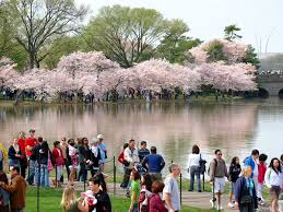 National Cherry Blossom Festival by Panoramio Photo Of Dsc00505 National Cherry Blossom Festival E