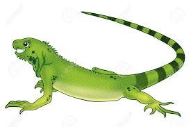 1 567 iguana cartoon stock illustrations cliparts and royalty