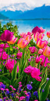 best 25 spring flowers pictures ideas on pinterest how to grow