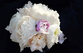 Peonies Bouquet Free Photo Bridal Bouquet Peony Bouquet Free Image On Pixabay