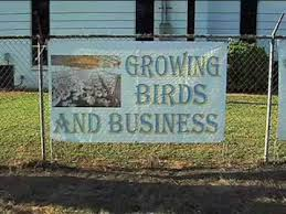 pilgrim s pride application pilgrim s pride reopening poultry plant closed in 2009