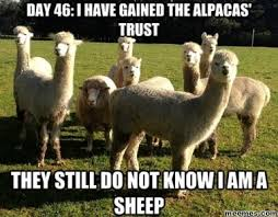 Alpaca Meme - baaa meme by polobronson memedroid