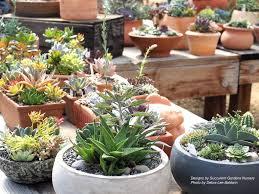 succulents meaning debra lee baldwin u0027s succulent blog