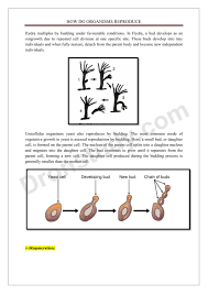 Cell Reproduction Concept Map Answers Chapter Notes How Do Organisms Reproduce Class 10 Science