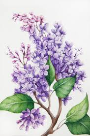 Lilca by Tatiana Azarchik Artwork Lilac Original Watercolor Botanical Art