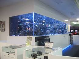 fish wall mounts large size saltwater wall mounted aquarium in the office