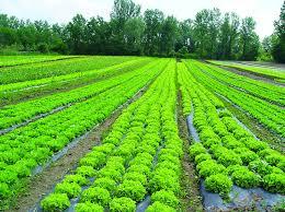 chambre agriculture 52 chambre d agriculture choux pommes de terre carottes laitues etc