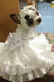 dog wedding dress dog wedding dress puppy bridal gown dog wedding dress