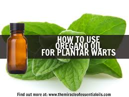Home Remedies For Planters Warts by Top 10 Essential Oils For Plantar Warts The Miracle Of Essential
