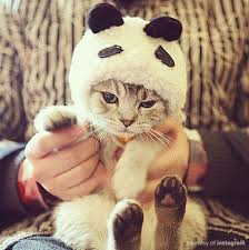 Halloween Costumes Cats 1025 Halloween Dog Costumes Cat Images Food