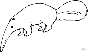 aardvark coloring pages getcoloringpages com