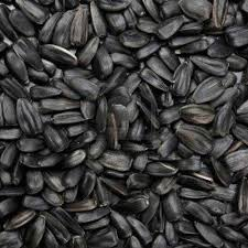 oil seeds castor seeds manufacturer from hassan