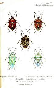 best 25 shield bugs ideas on pinterest beautiful bugs beetles