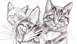 sketch of avalon the cat one drawing daily
