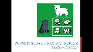 punnett square practice problems codominance youtube