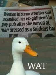 Duck Meme - the best confused duck memes memedroid