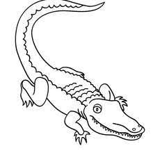 alligator coloring pages hellokids