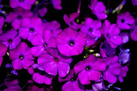 purple flowers purple flowers pictures 166 posted