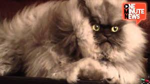Grumpy Cat Has Died Youtube - meet colonel meow youtube