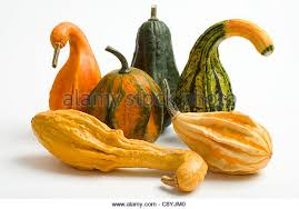colourful vegetable squashes gourds stock photos colourful