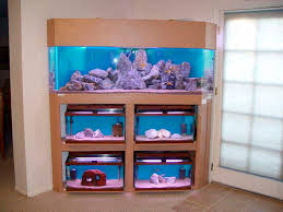 best 25 fish aquarium decorations ideas on pinterest fish tank