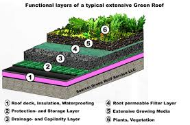 typical green roof detail garden tips designs flowers plan making