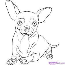 chihuahua pug coloring pages coloring pages ages