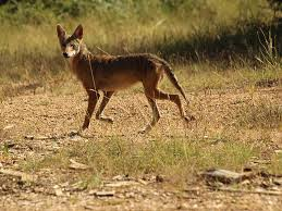 Coyote In My Backyard Coyote Like This In My Backyard Photography Pinterest