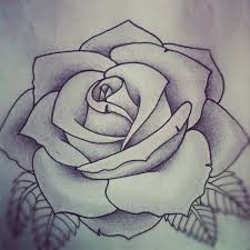drawn rose black gray rose pencil and in color drawn rose black
