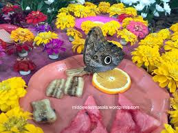 dubai butterfly garden middleeastmasala